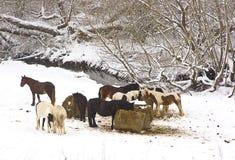 De scène van de sneeuw stock afbeeldingen
