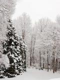De scène van de sneeuw. Stock Foto's