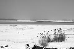 De scène van de sneeuw Stock Foto