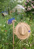 De scène van de tuin Stock Afbeelding
