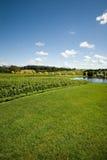 De Scène van de wijngaard stock foto