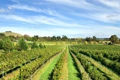 De Scène van de wijngaard royalty-vrije stock foto