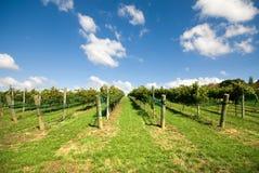 De Scène van de wijngaard royalty-vrije stock fotografie