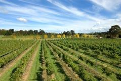 De Scène van de wijngaard stock afbeeldingen