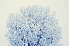 De scène van de winter Stock Fotografie
