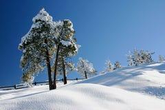 De scène van de winter in het Nationale Park van de Canion Bryce Royalty-vrije Stock Afbeelding