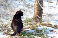 De scène van de winter Kat in een zonnige bevroren tuin Royalty-vrije Stock Foto's