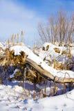 De scène van de winter met cattails Royalty-vrije Stock Afbeeldingen