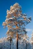 De scène van de winter van Noorwegen Royalty-vrije Stock Foto's