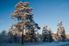 De scène van de winter van Noorwegen Royalty-vrije Stock Foto