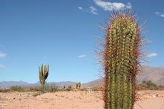 De scène van de woestijn Stock Foto's