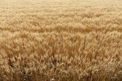 De scène van een goede oogst Stock Foto's
