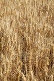 De scène van een goede oogst stock foto