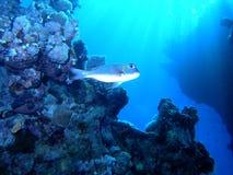 De scène van het koraal Royalty-vrije Stock Fotografie