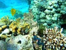 De scène van het koraal met het Reuzetweekleppige schelpdier Stock Fotografie