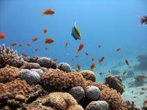 De Scène van het koraalrif Stock Fotografie