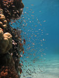 De Scène van het koraalrif Stock Foto
