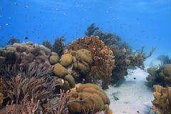 De scène van het koraalrif royalty-vrije stock afbeelding