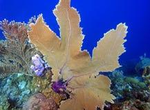 De scène van het koraalrif royalty-vrije stock foto's