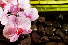 De scène van het kuuroord met roze orchidee Stock Afbeelding