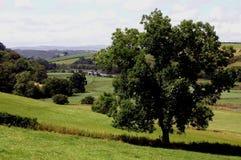 De scène van het land in Devon, Engeland Stock Fotografie