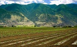 De Scène van het landbouwbedrijf - 1 Stock Afbeeldingen