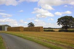 De scène van het landbouwbedrijf Stock Foto