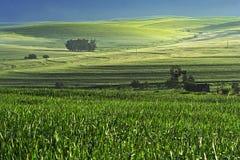 De scène van het landbouwbedrijf Stock Fotografie
