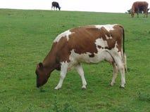 De scène van het landbouwbedrijf stock afbeeldingen