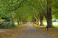 De Scène van het park van Cambridge, het UK Royalty-vrije Stock Afbeeldingen