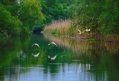 De scène van het Peacefullmeer met vogels tijdens de vlucht Stock Foto's