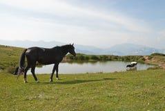 De scène van het platteland Stock Fotografie