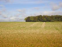 De scène van het platteland Stock Foto's