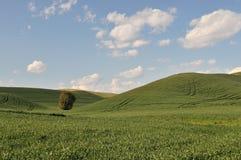 De scène van het Platteland van de lente in Colfax Stock Fotografie
