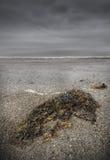 De scène van het strand met Overzeese Onkruid en Mist royalty-vrije stock foto