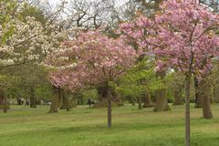 De scène van de lente in het park Royalty-vrije Stock Afbeelding