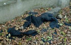 De scène van de misdaad, het slachtoffer` s jasje is nog in het hout stock fotografie