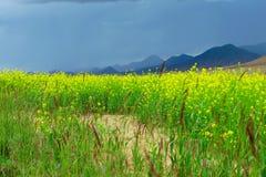 De scène van Tibet Stock Foto's
