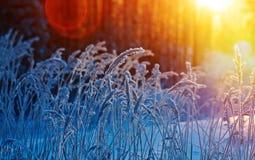 De scène van de winter stock afbeeldingen