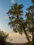 De scène van de zomer De zomeravond van Curonian-lagunelandschap in Litouwen europa royalty-vrije stock foto