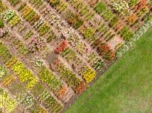 De scèneachtergrond van het de zomerlandschap met bloemgebied Luchtphot Stock Fotografie