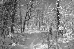 De scènes van de winter in zwart-wit stock afbeeldingen