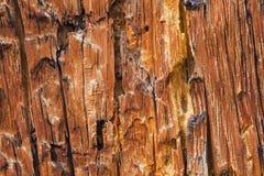 De schade van de Kever van de Pijnboom van de schors royalty-vrije stock foto's