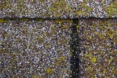 De Schade van de vorm/van het Mos op de Dakspanen van het Dak Stock Afbeeldingen