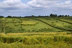 De schade van het landbouwgewasonweer royalty-vrije stock afbeeldingen