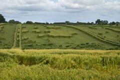 De schade van het landbouwgewasonweer stock fotografie