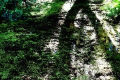 De schaduw die van de bomen op het moeras vallen royalty-vrije stock fotografie