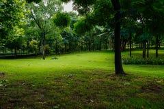 In de schaduw gesteld grasrijk gazon na regen in de zomerochtend stock foto