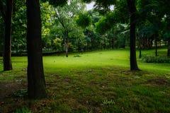 In de schaduw gesteld grasrijk gazon in de zomerochtend na regen royalty-vrije stock foto's