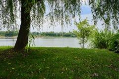 In de schaduw gesteld oever van het meergazon in zonnige de zomermiddag stock fotografie